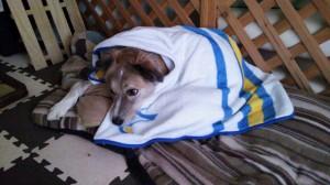 毛布がやってきた